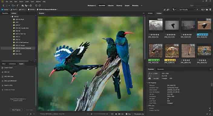 Adobe Bridge 2020 SP插图1