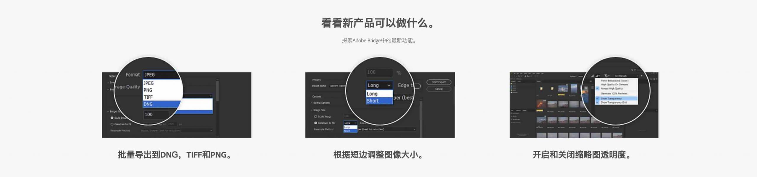 Adobe Bridge 2020 SP插图2