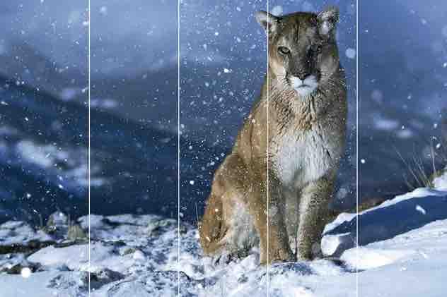 真正的雪(透明通道)插图3